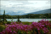 Typical Alaska - flowers, water, mountains, snow