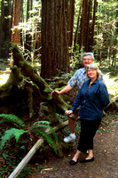 In Armstrong Redwoods State Reserve